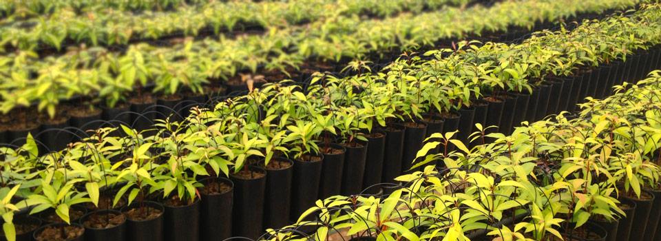 maceta-cultivo-baja